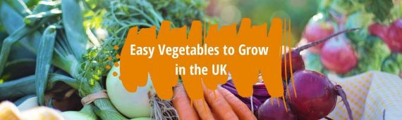 easy vegetables to grow uk fi