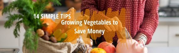 growing vegetables to save money