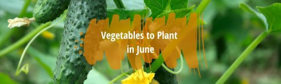 vegetables to plant in june fi